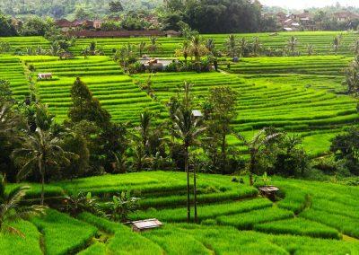 Indonésie départ Perpignan Clémenceau voyages Pays Toraja 3 (2)