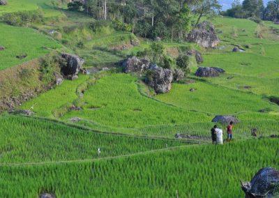 Indonésie départ Perpignan Clémenceau voyages Toraja (3)